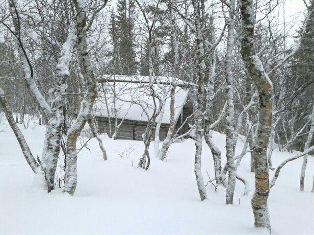 Houtopslag en buitentoilet in Fulufjällets Nationalpark