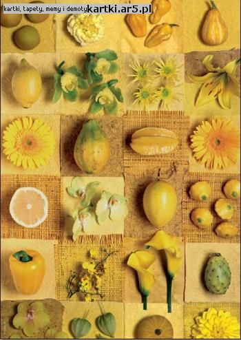 Yummy Yellow kompozycja i fotografia Andrea Tilk
