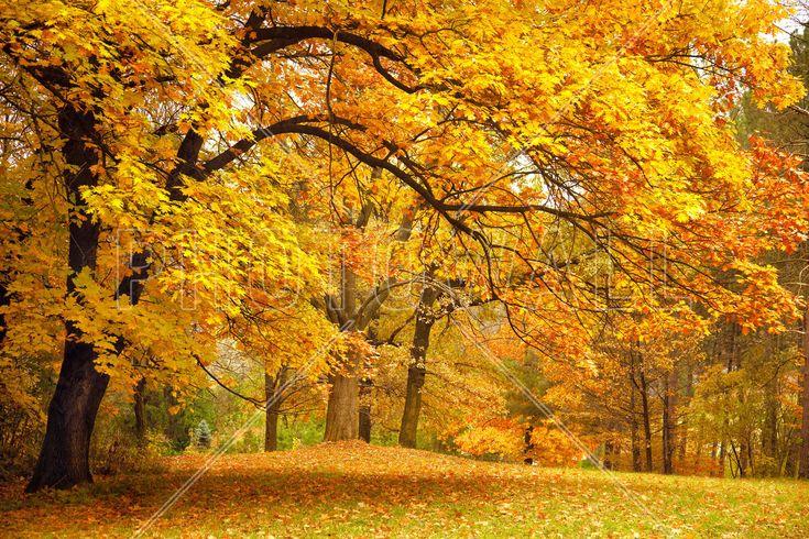 Colorful Autumn Leaves - Wall Mural & Photo Wallpaper - Photowall