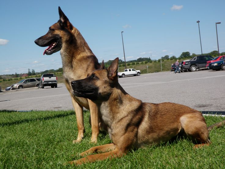K9 Saves His Owner From Being Shot In The Back