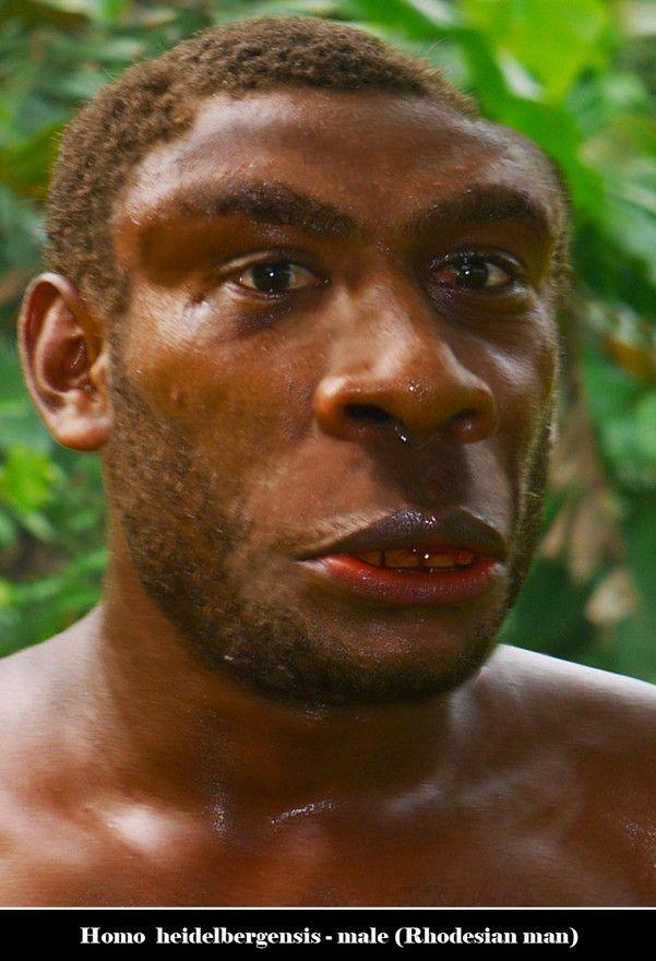 Homo Heidelbergensis - male
