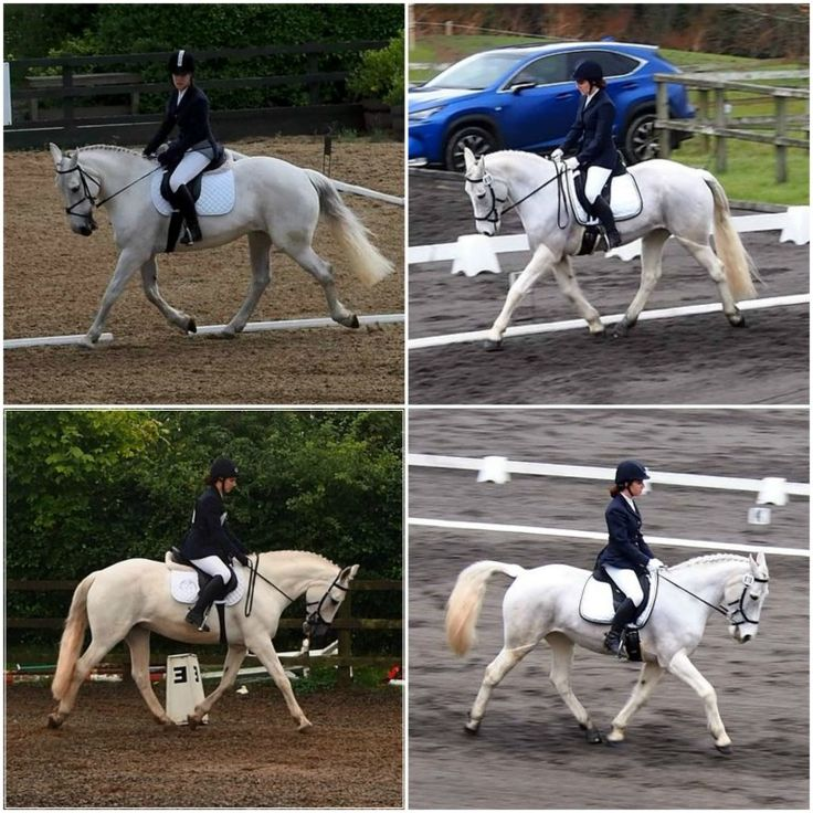 The 'Ultimate Dressage Experience' with Sandra Blake Farrell in Kildare - a review of my experience and how it has impacted me as a dressage rider.