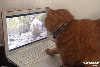 Chat qui cherche une souris hors de l'écran d'ordinateur.