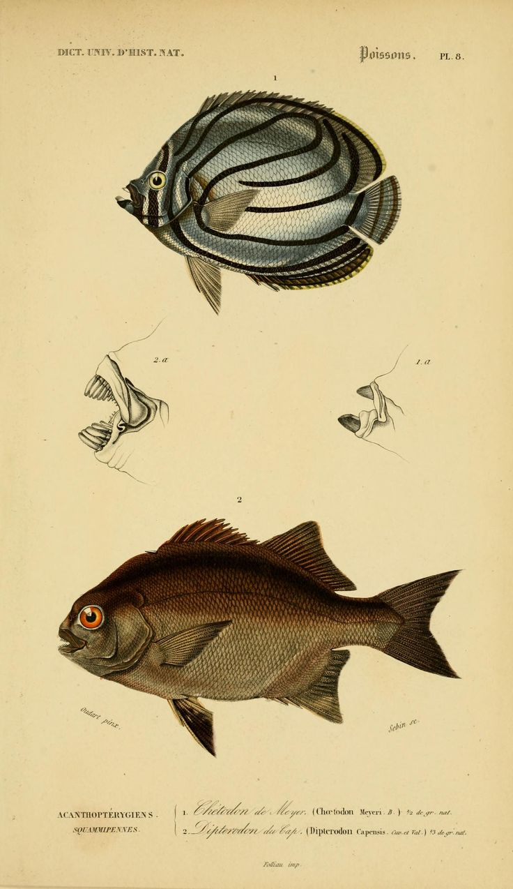 2 1849 atlas zoologie reptiles poissons insectes coastal art fish