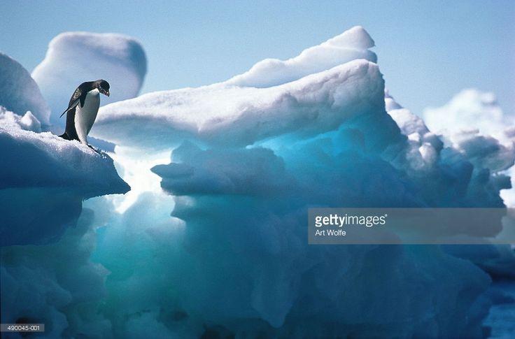 Foto de stock : Adelie penguin (Pygoscelis adeliae) on ice formation, Antarctica