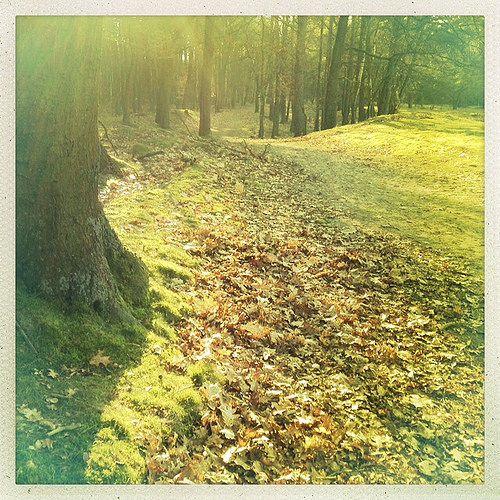 Almost Spring at Drouwenerzand, Drenthe, The Netherlands #hipstamatic #nederland #drouwenerzand