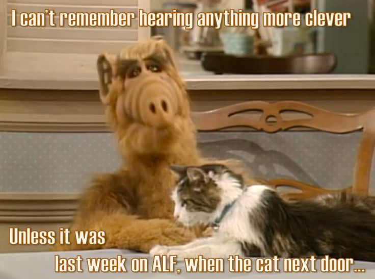 Cats Meme I Miss You