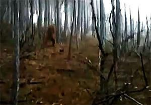 4 Collections of Paranormal Videos That Will Scare Your Pants Off: Bigfoot Videos