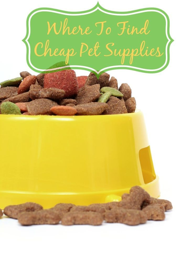 Where To Find Cheap Pet Supplies to Save Money on Pet Costs