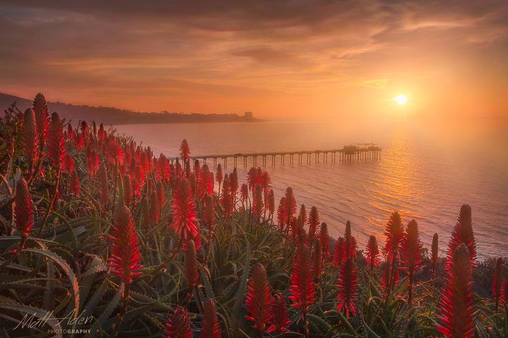 Blooming Aloe by Matt Aden on 500px