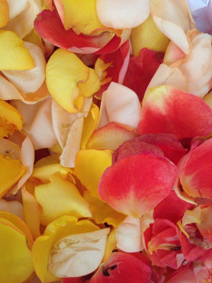 Roses petal
