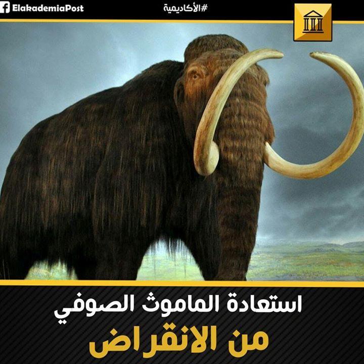 كانت حيوانات الماموث الصوفي ضخمة ومشعرة ذي أنياب كبيرة تواجدت على جزر صغيرة فى سيبيريا و الآسكا منذ 3000 سنة مضت وبينما المصريون ي Movie Posters Movies Poster