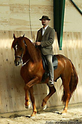 Zarif Piaff Horses Are Life Horses Dressage Horses