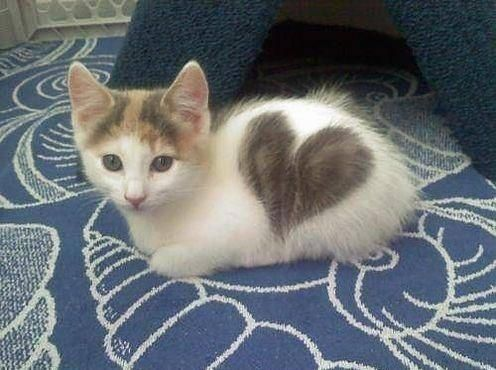Cat love http://ift.tt/2hVBLAz