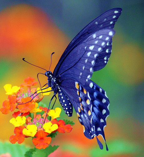Beautiful - Tips for planning a butterfly garden. #dan330 http://livedan330.com/2015/07/20/planning-a-butterly-garden/