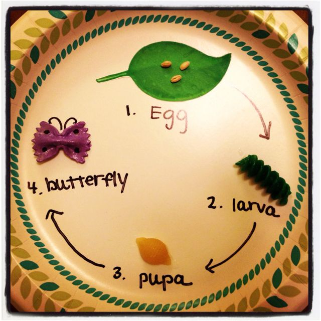 Butterfly lesson- it would be fun to cook pasta and have as a snack at the end :)