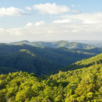 Take a drive through the stunning Gold Coast hinterland