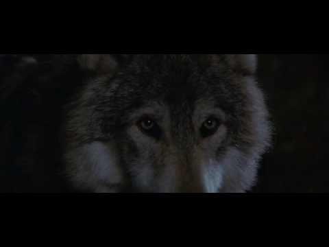 best dances wolves images dances dances wolves fire dance