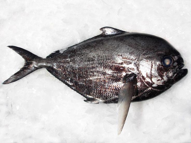 Pesce castagna, questo sconosciuto!