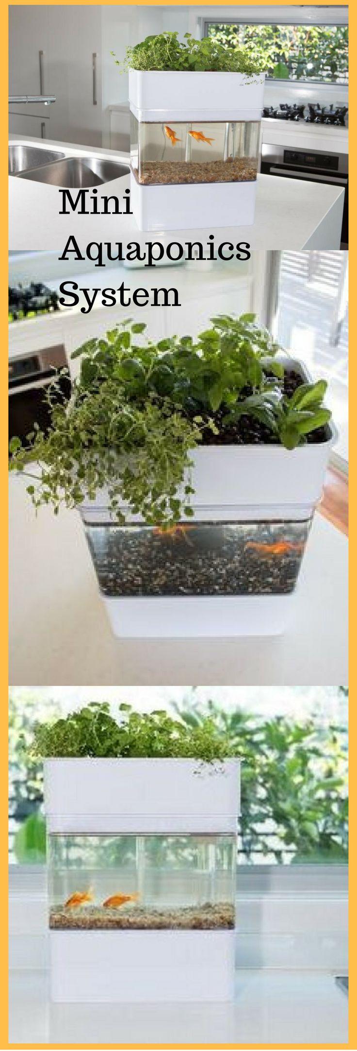 Mini Aquaponics System. What a great way to show a mini ecosystem