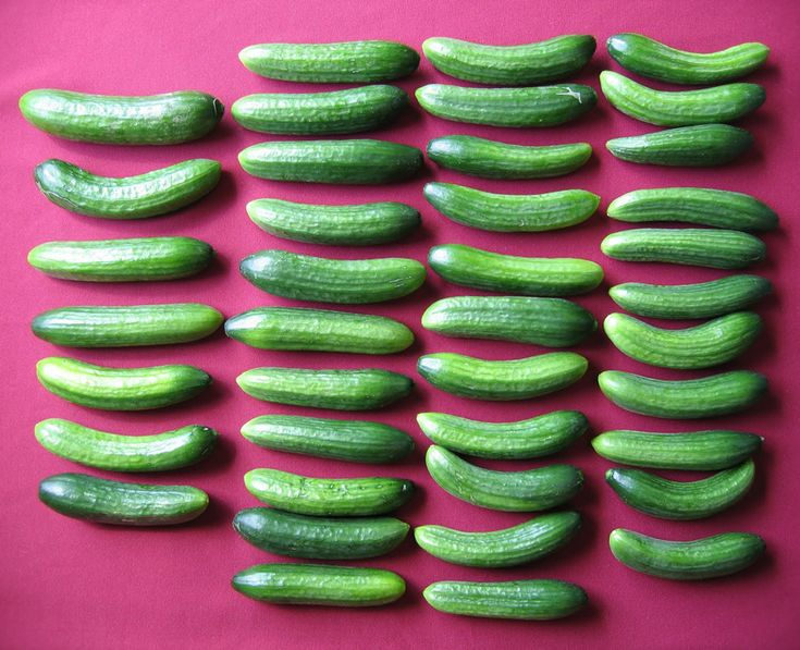 Taste of the Season Cucumber Adam: a high-yielding, smooth cuke that is perfect for greenhouse growing