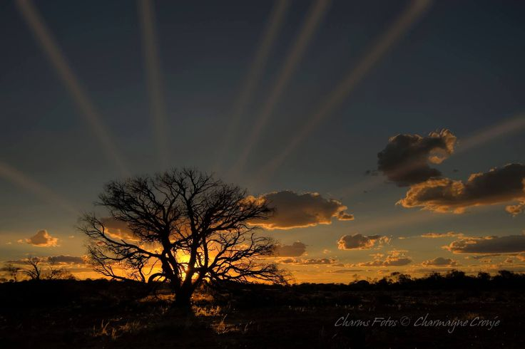 Great shot taken near Roxby Downs. Thanks Charms Fotos - Charmayne Cronje for sending this thru!!. Courtesy South Aussie with Cosi