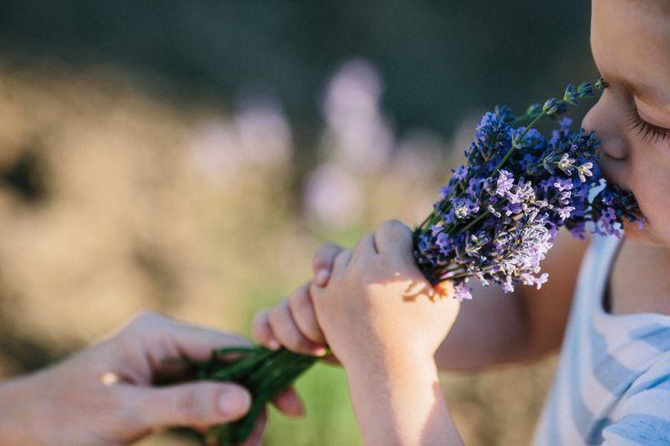 He is enjoying smelling lavender