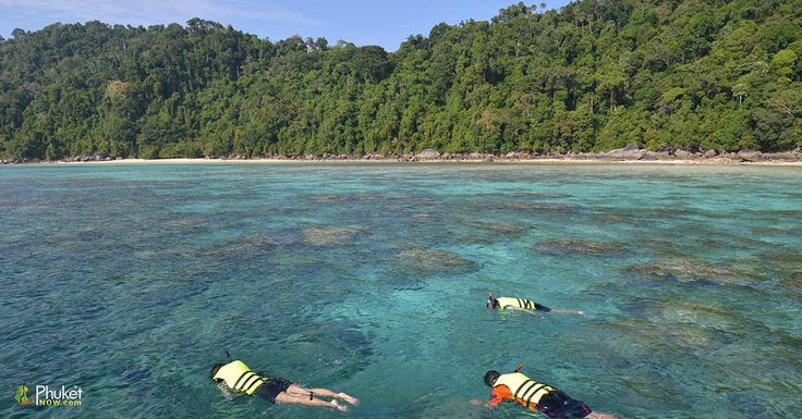 Tourists snorkeling in clear water beautiful sea like a heaven at Surin island, Phang-nga Thailand