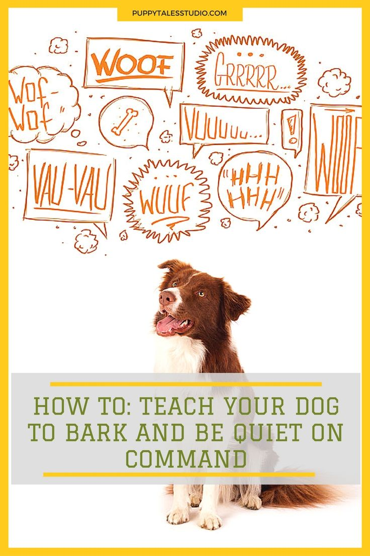 HOW TO: Teach your dog to bark & be quiet on command. It's a fun and easy trick to keep your dog mentally fit. Click through to learn more about this fun and engaging dog trick or repin and save for later!