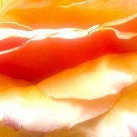 Communication in Silence Webinar 2011 by Almine. A great meditation!