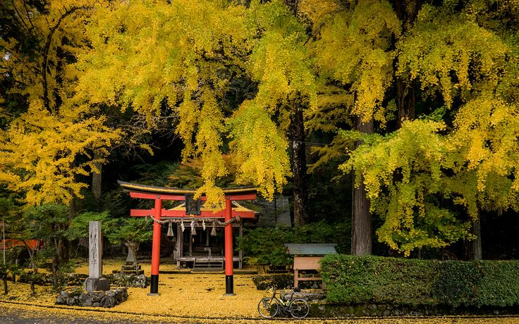 Kyoto Photo: Fall Color At Iwato Ochiba-jinja Shrine In Kyoto