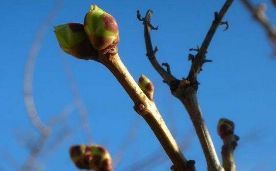 PROGNOZA METEO:Meteorologii au publicat prognoza METEO pentru perioada 17 februarie - 2 martie, realizata in baza datelor primite de la Centrul european pentru prognoza din Anglia. Potrivit estimari