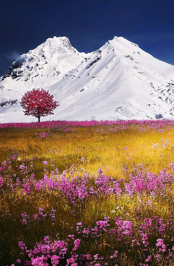 Alps mountain landscape, 17 selected beautiful landscapes