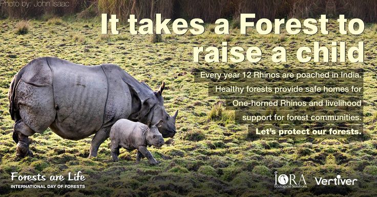 Thank you John Isaac for sharing your wonderful photo of #onehornedrhinos at Kaziranga National Park to help us celebrate #WorldWildlifeDay and India's forests!   #forestathon day 3 at India Forest Portal withVertiver @Iora Ecological Solutions.  #forestsofindia I #forestsarelife I #forestsmatter I#IntlForestDay I #worldforestryday #loveforests  Ministry of Environment, Forests & Climate Change, Government of India WWF Center for International Forestry Research (CIFOR)