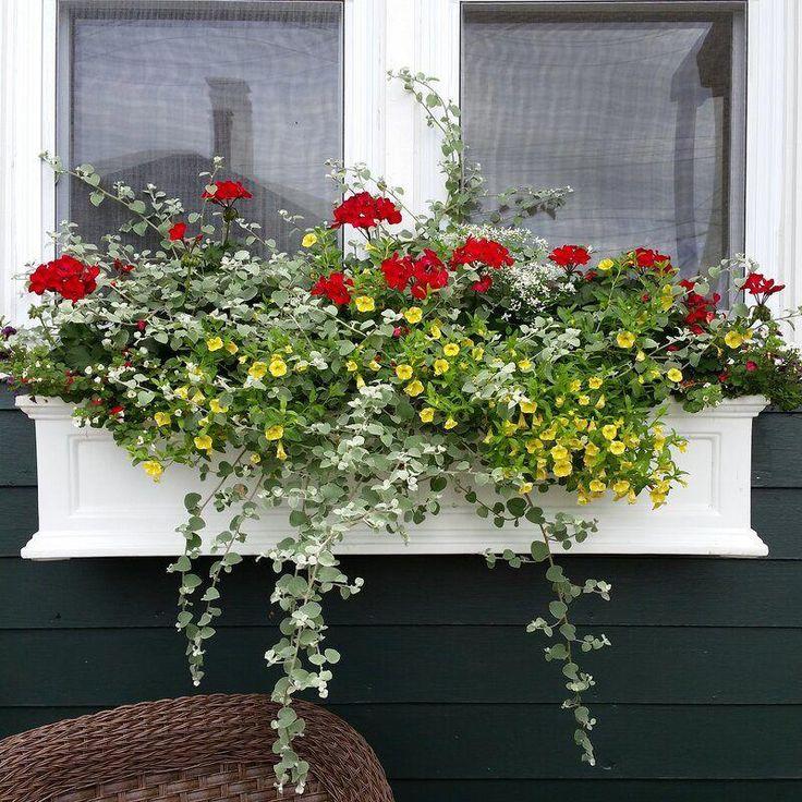Demonte self watering plastic window box planter in 2020