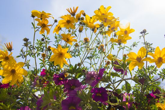flowers by Svetlana Fomina · 365 Project