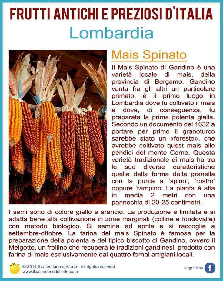 Lombardia: Mais Spinato