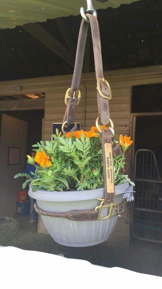Old halters or memorable halters from past horses... Great way to reuse it