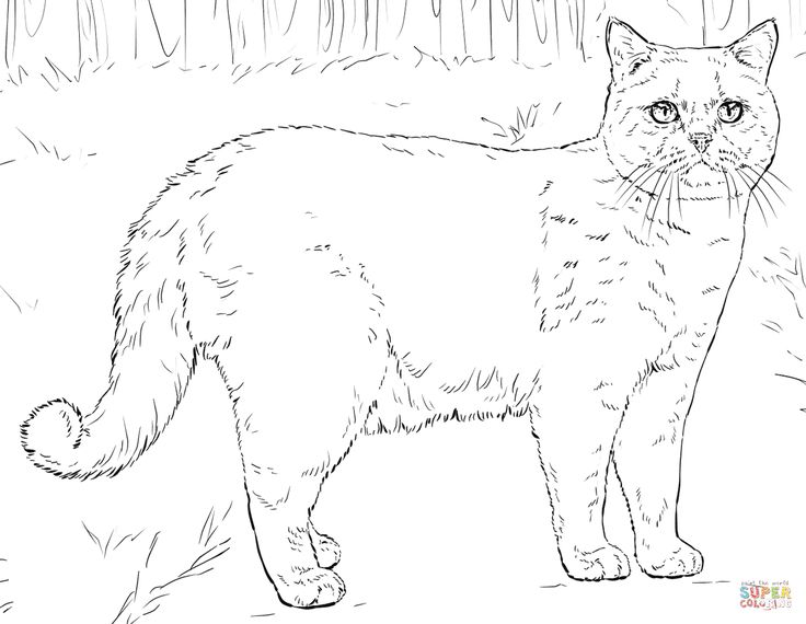 British Shorthair Cat Coloring Page From Cats Category Select 26073 Printable Crafts Of Cartoons Nature Animals Bible And Many More