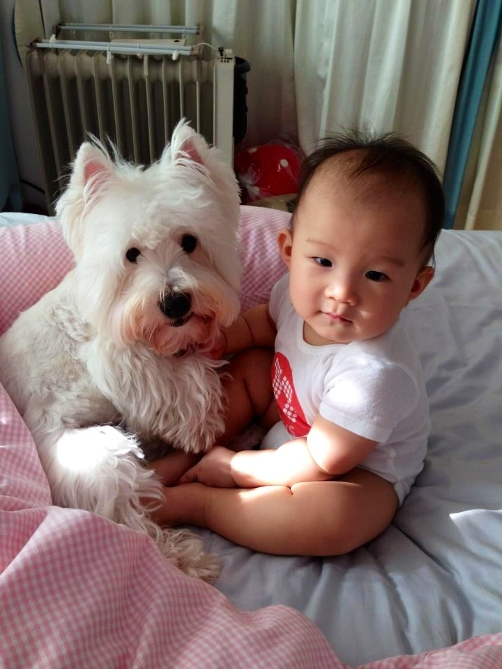 Image result for westies dog, hugging a child