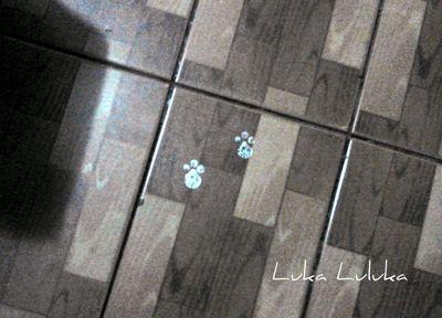Luka Luluka: Rabbit footprints