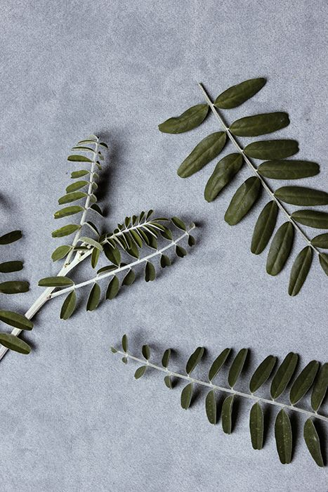 DECO GROW | Medical Herbs photographed: Jessie Bell; Production: Sanri Pienaar