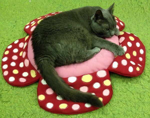 """""""ラフレシア猫ざぶとん rafflesia neko zabuton"""" rafflesia cushon for cats / cat bed Ⓒ HAPPa-Ya Nagako Ono URL: happa-ya.net #cat #catbed #rafflesia"""