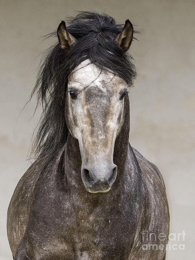 horseshoesn-heartbeats:  Carlo Walker photography