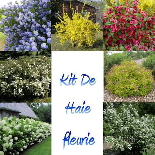 13 best images about haies de jardin on pinterest for Plante fleurie jardin