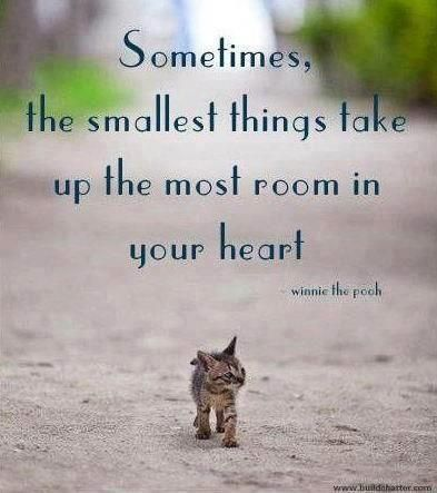 """""""The smallest things take up the most room in your heart."""" Cats, birds, rabbits, chickens.. you can find an abundance of wonderful animals at rescues and shelters! Remember to check us out! www.OllieDiggs.com """"Banding Together for Animal Rescues"""""""