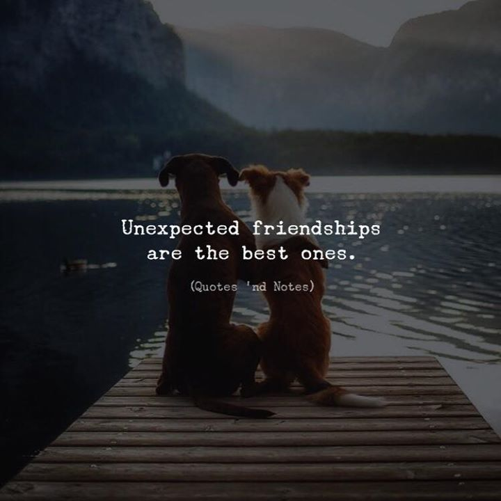 Unexpected friendships are the best ones. —via http://ift.tt/2eY7hg4