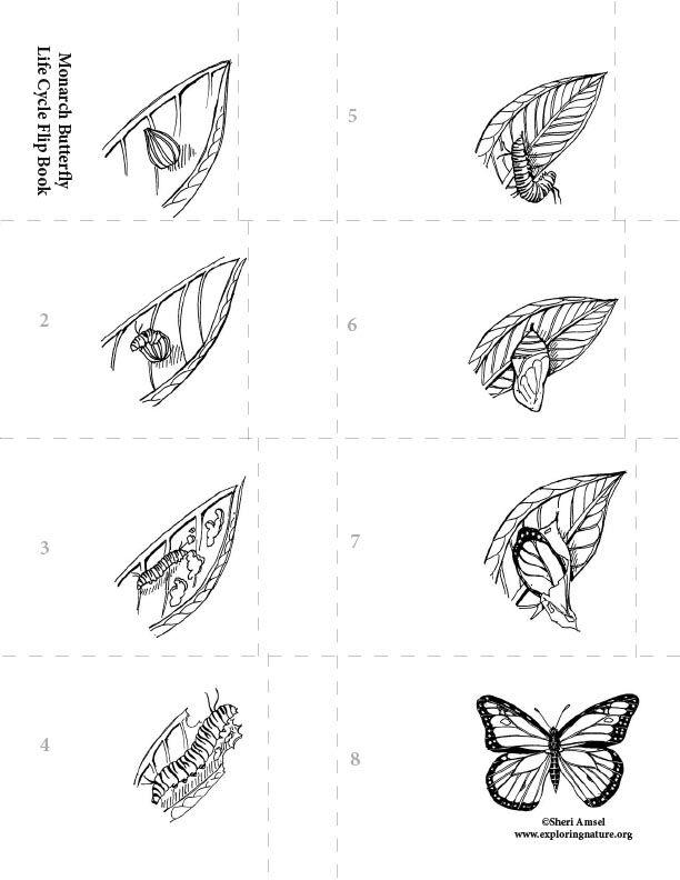 378 best Schmetterling images on Pinterest | Schmetterlinge ...