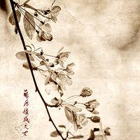 Brigitte Carnochan: Cherry Blossoms