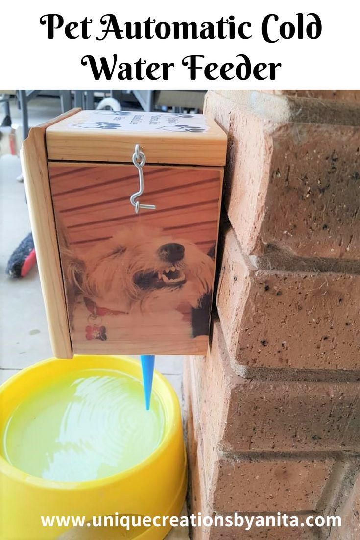 How to make an automatic cold water feeder for your pets.  An easy way to cool your pets down in summer.